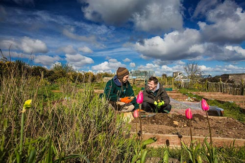 Two people crouching down outdoors in an allotment surrounded by plants